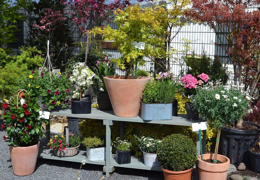 Sortiment topfpflanzen haufler baumschule und - Topfpflanzen garten ...