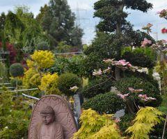 Asiatisches Ambiente ist in vielen Gärten zu finden.