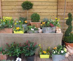 Bepflanzte Schalen und Töpfe