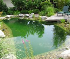 Üppig bepflanzter Schwimmteich