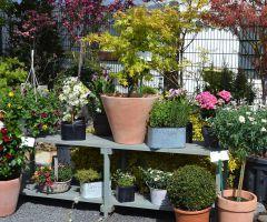 Topfpflanzen im Sommer